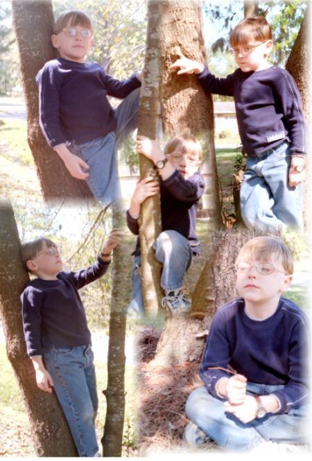 treeclimb